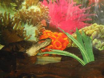 My Turtle by gumzo