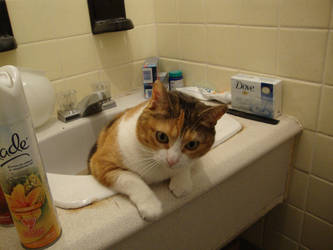 Lili's bathroom 3 0f 5 by JackAsmo