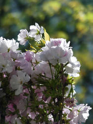 Pink flowers 2 by Yamraj88