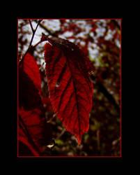 .:Read leaf:. by Silorverion