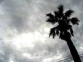 grey day by glasschild
