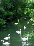 mucho swan by glasschild