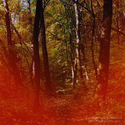 Across the autumnal fire by firepaved