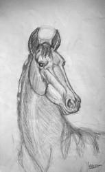 Horse 3 by natiwar02
