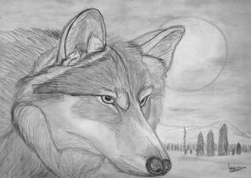 Wolf by natiwar02