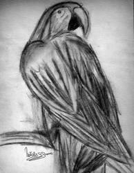 Parrot by natiwar02