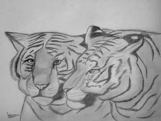 Tigers by natiwar02