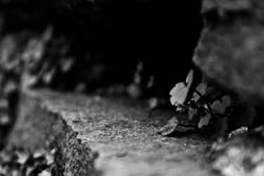 Stone Flower by whitewolfislove