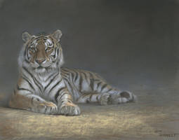 Tiger pastel by wimke