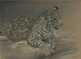 Jaguar : Charcoal and pastel on Stonehenge kraft by wimke