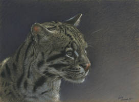 Ocelot : Charcoal and pastel on Stonehenge kraft by wimke