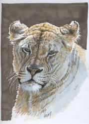 Asian lionnes : markers by wimke