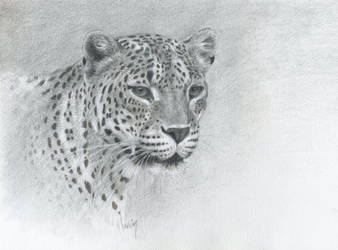 Leopard head : Pencil and markers by wimke