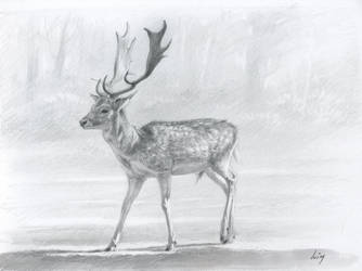 Deer : Graphite and marker by wimke