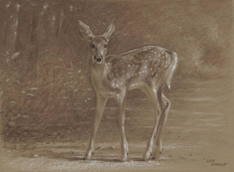 Bambi by wimke