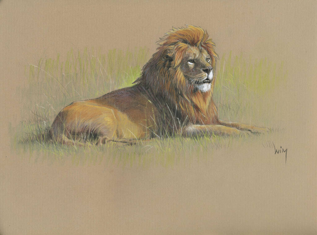 Lion : Markers and pastel pencils on kraft by wimke