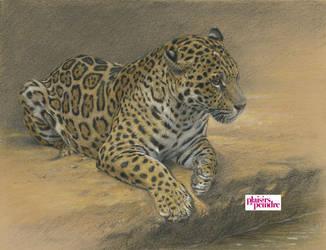 Jaguar : Color version by wimke