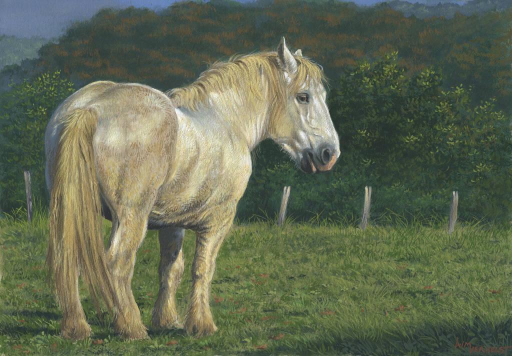 Draft horse by wimke