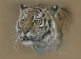 Tiger portrait by wimke