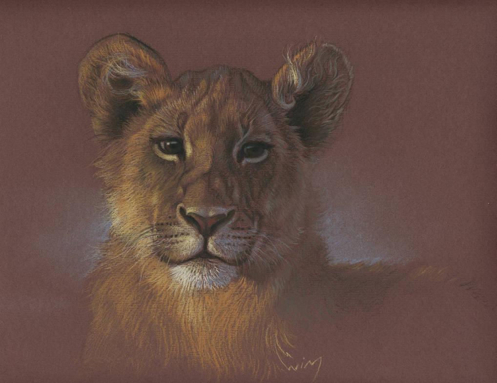 Lion cub by wimke
