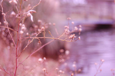 Overgrown by CaseyLu
