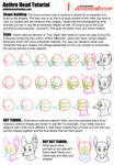 Tutorial - Constructing Anthro Heads by Temrin