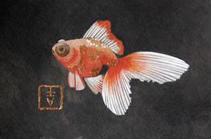 Black Water Goldfish by CheiftainMaelgwyn