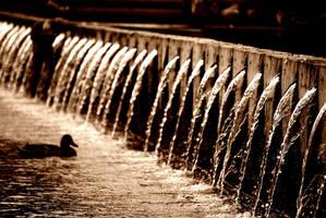 Finding nemo... by bodrisebastian