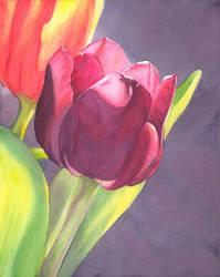 Tulip - by terepalomitas by painters