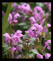 In my garden 3 by Brigitte-Fredensborg