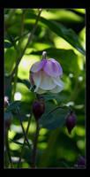 In my garden 5 by Brigitte-Fredensborg