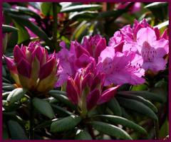 In my garden 6 by Brigitte-Fredensborg