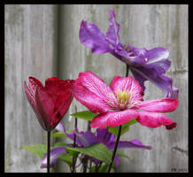 Two colours in one by Brigitte-Fredensborg