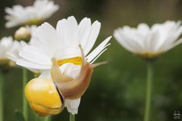 Respect your Flower by Brigitte-Fredensborg