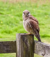 Bird of Prey by TarJakArt