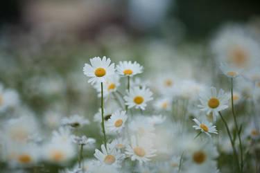 Summertime feelings by Deemax
