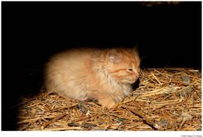 Little Farm Kitten by hunter1828