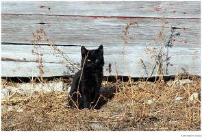 Black Cat by hunter1828