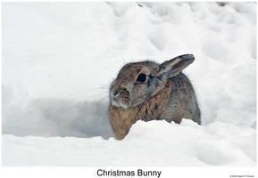 Christmas Bunny by hunter1828