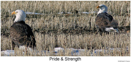 Pride and Strength by hunter1828