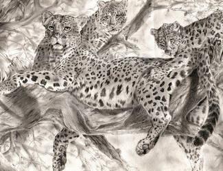 Leopard Family by Yuri-Nikko