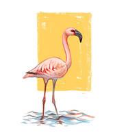 Flamingo by Drkav