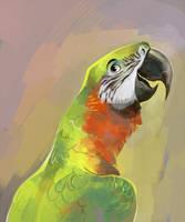 Macaw by Drkav