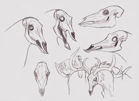 Happy deer skull by Drkav