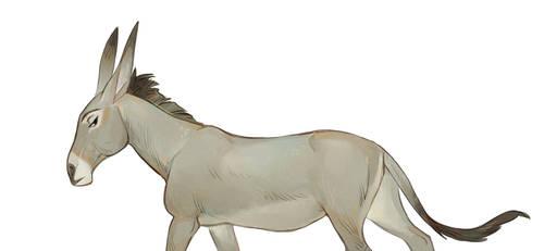 Donkey by Drkav