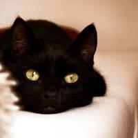 psycho cat by Catliv
