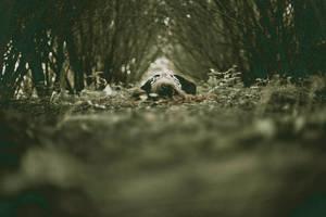 symmetry of hiding by Catliv