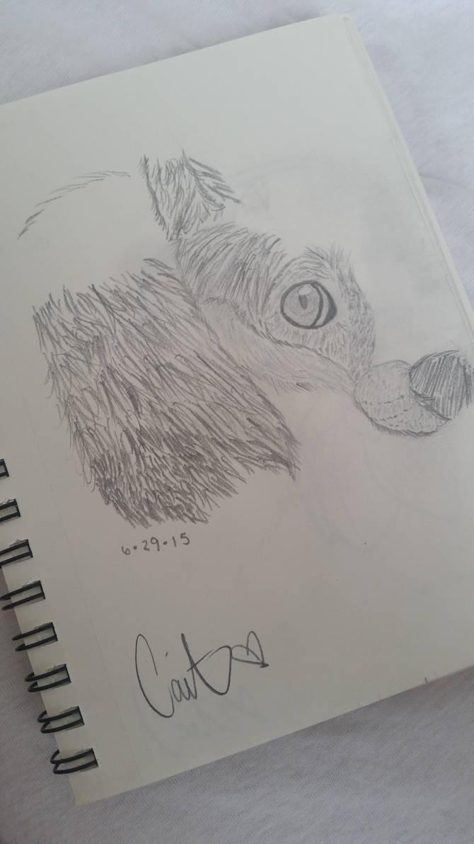 SKTCH: Unfinished Fox by Caitenix