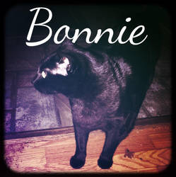 this is my cat, Bonnie. by BrokenWarriorYT