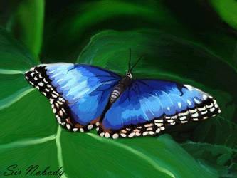 Butterfly by DarkSirNobody